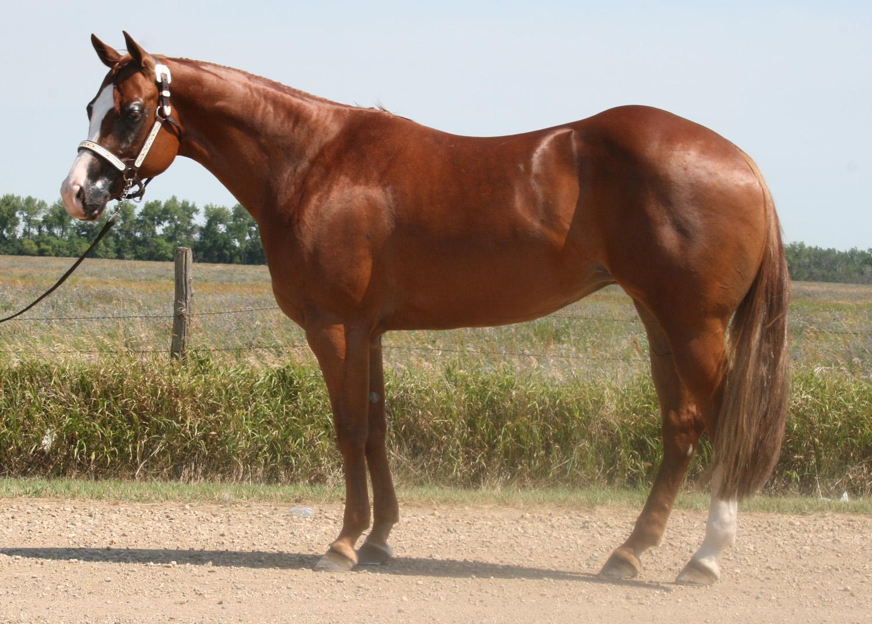 4h horsemanship